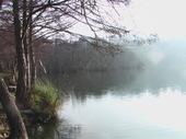 Brouillard_1